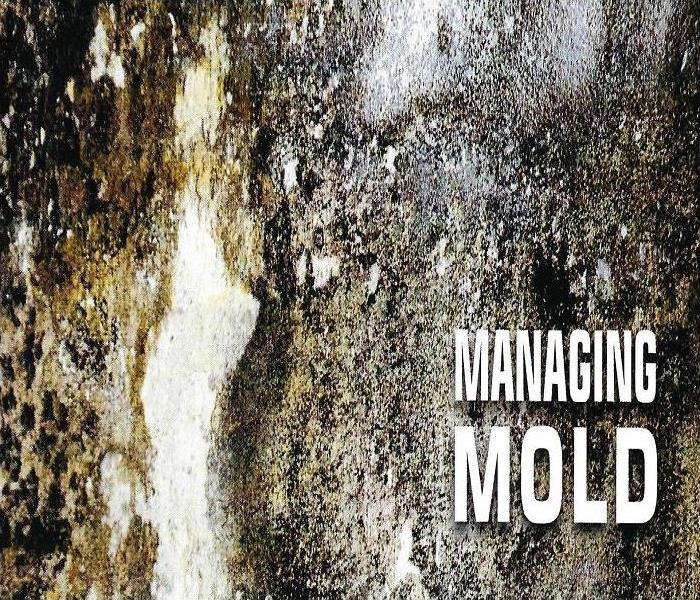 Mold Remediation Mold Myth Basics